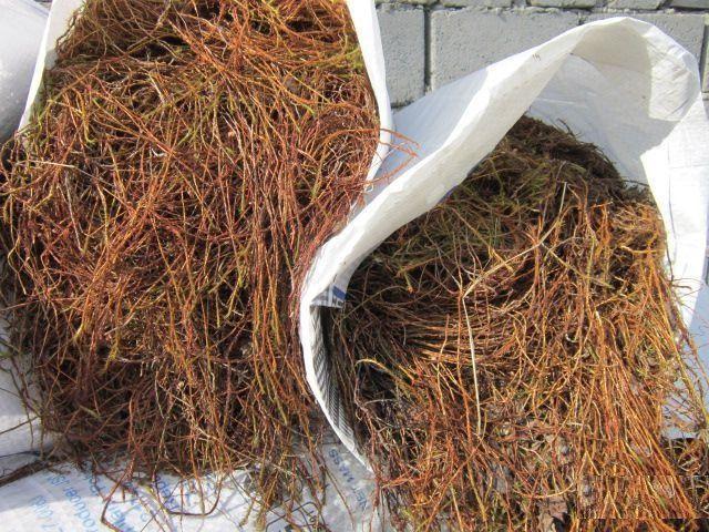 Собранный кукушкин лен