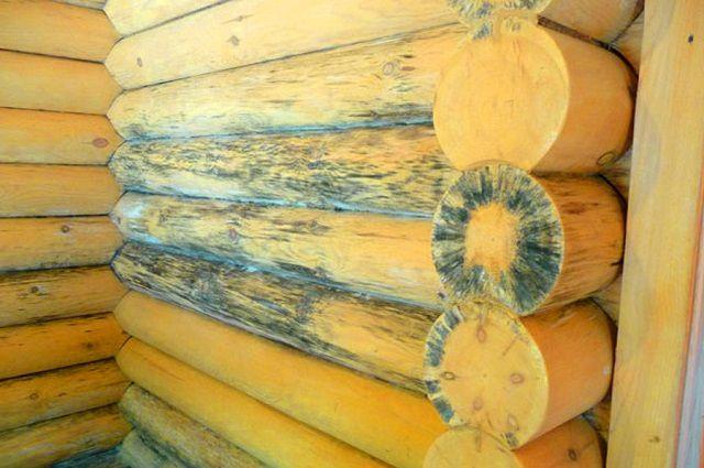 Последствия поражения древесины грибком