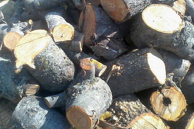 Дрова из фруктовых деревьев – это обычно очень качественное топливо. Вопрос лишь в том, где его заготовить в заслуживающих внимания масштабах?